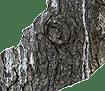 hout logo-link bij beelden